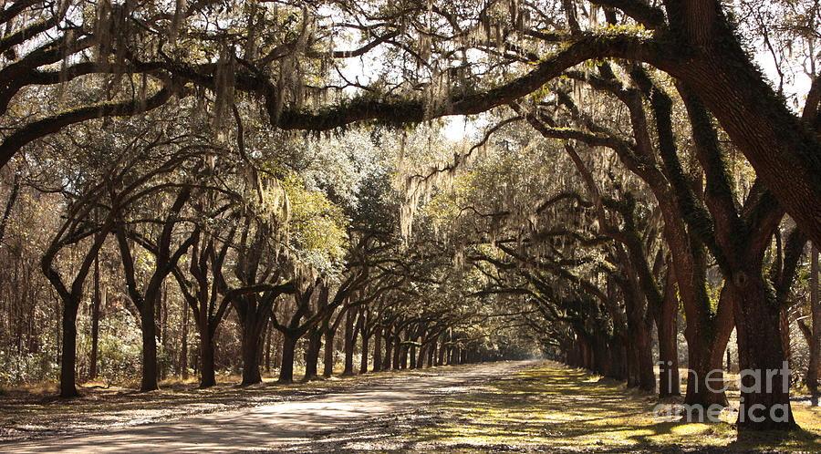Live Oaks Photograph - Warm Southern Hospitality by Carol Groenen