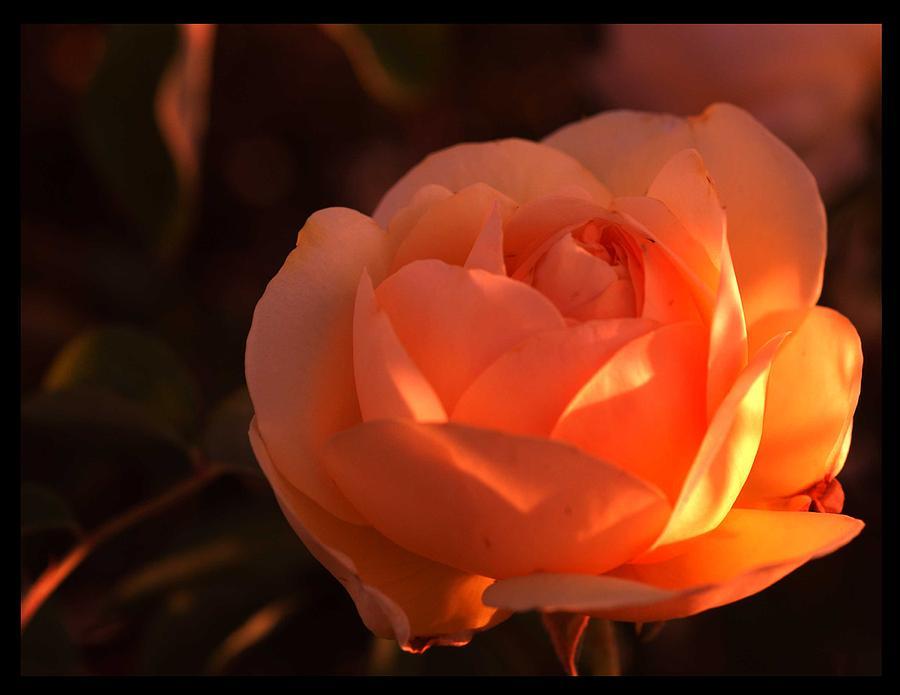 Flowers Photograph - Warm Sun by Richard Gordon