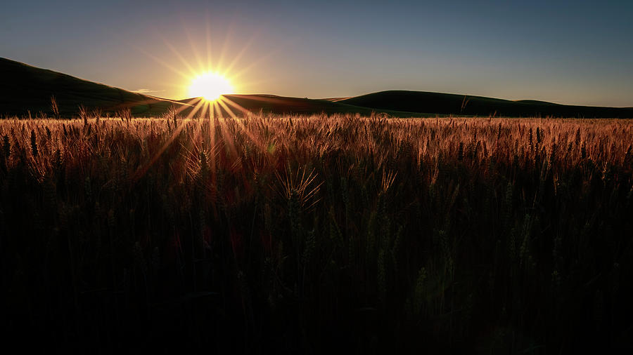 Palouse Photograph - Warmth And Illumination by Windy Corduroy