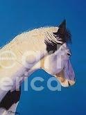 Horse Painting - Warrior by Teresa Boston