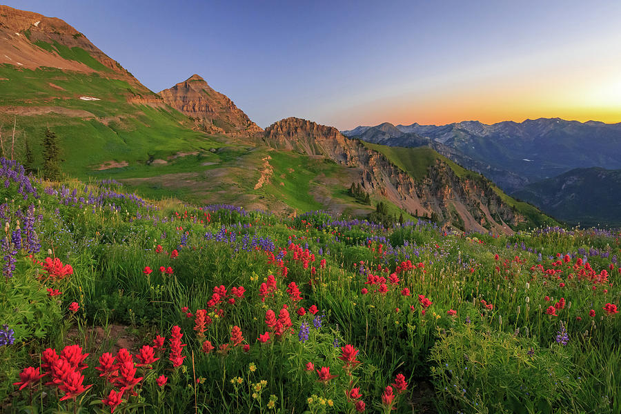 Wasatch Wildflowers In Dawn Light. Photograph