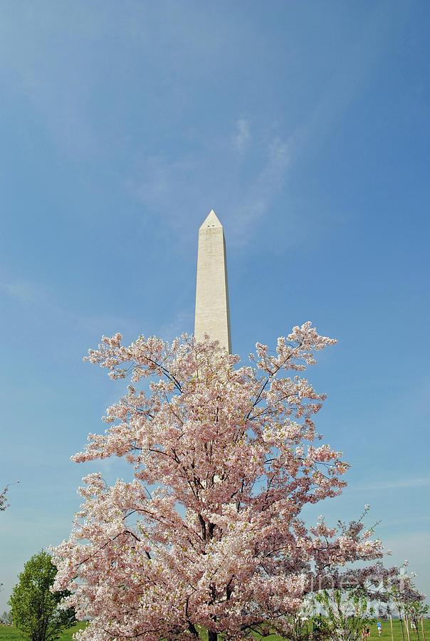 Cherry Photograph - Washington Mounument by Jost Houk