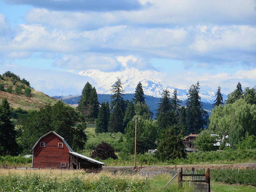 Washington's Mt. Adams as seen from the Hood River Oregon area by Elizabeth Rose