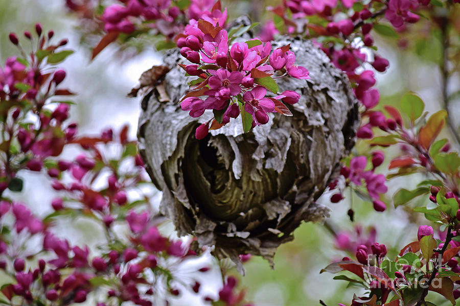 Wasp Nest Spring Floral 2018 by Theresa Kocka