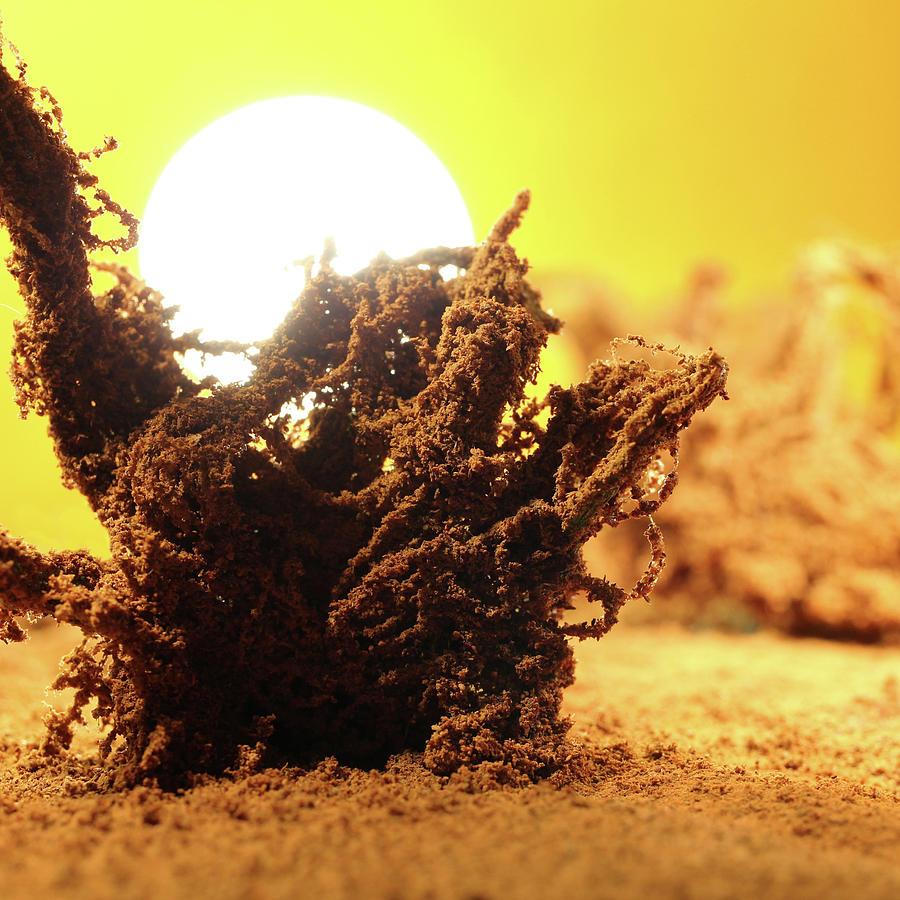 Wasteland by Stephen Dorsett