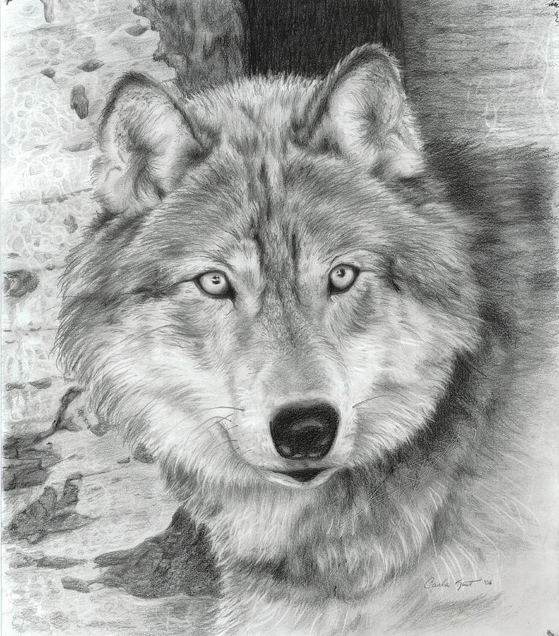 Pencil Drawing - Watchful Eyes by Carla Kurt