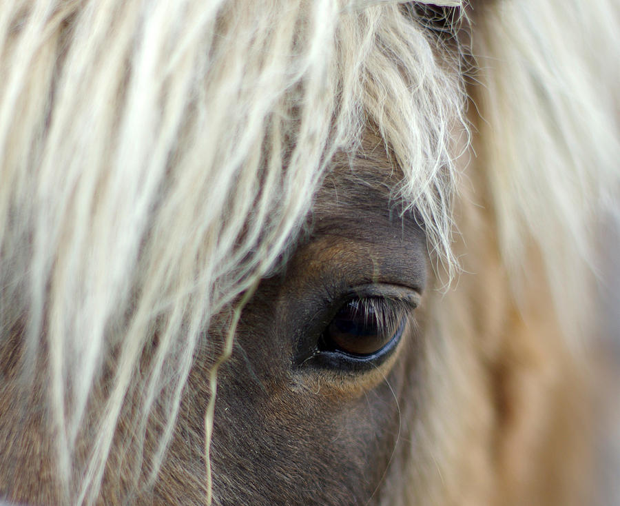 Pony Photograph - Watchful One by Linda Mishler