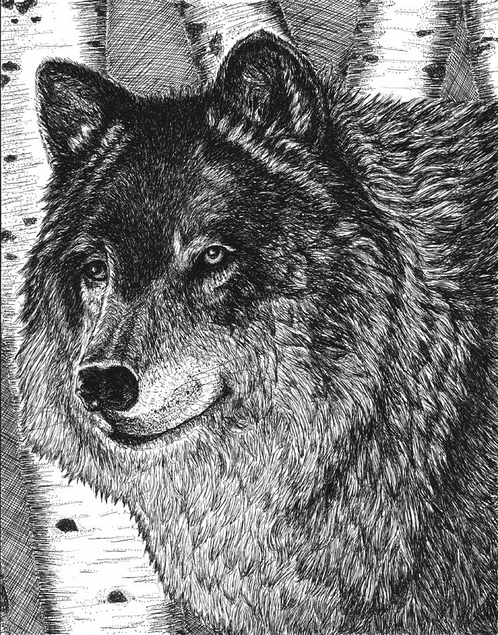 Wolf Drawing - Watching by Diane Sleger