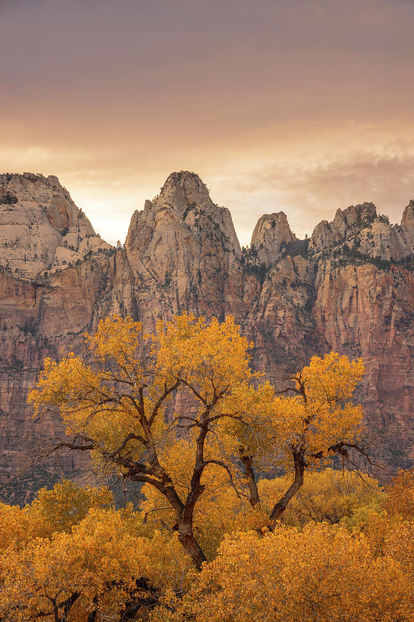 Watching Over Zion  by Dustin LeFevre
