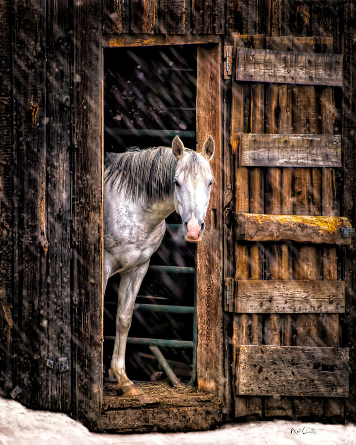 Horse Photograph - Watching The Snow Fall by Bob Orsillo
