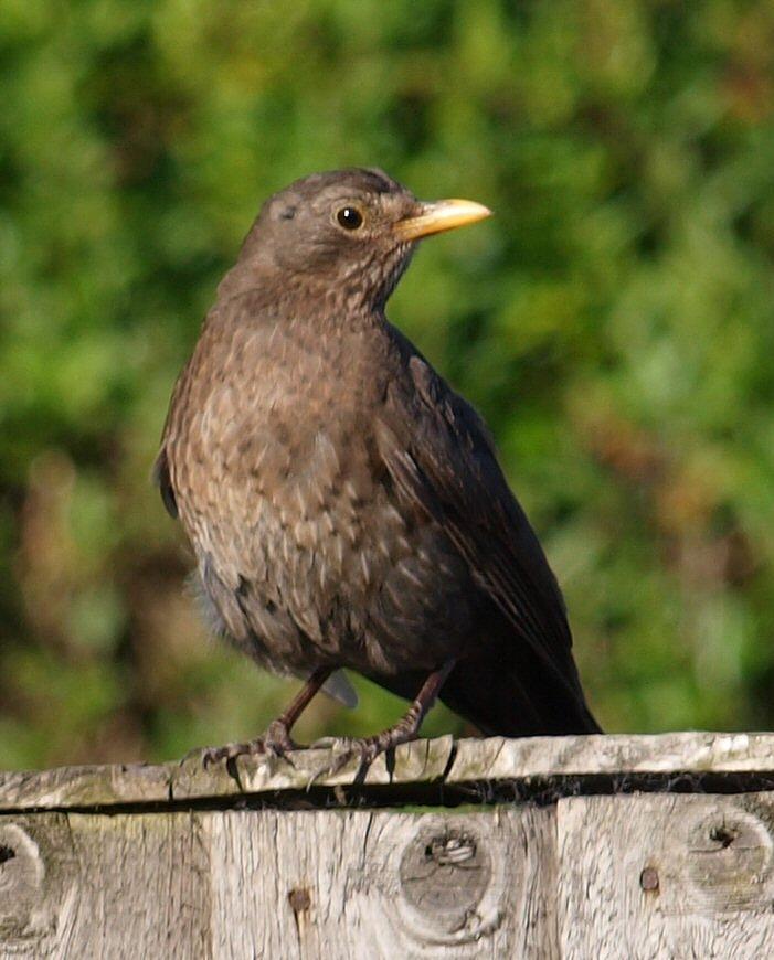 Bird Photograph - Watching by Wendy Brittain