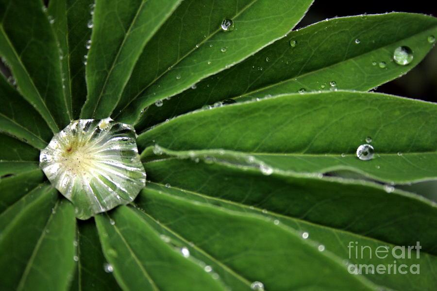 Water Photograph - Water Drop by Marta Grabska-Press