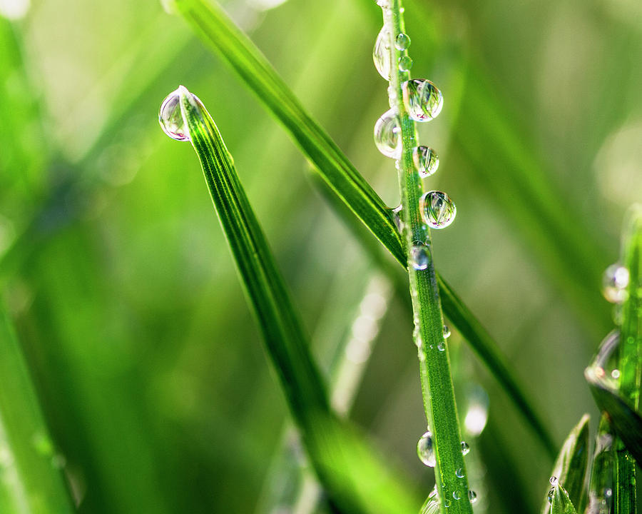 Water Drops Photograph - Water Drops On Spring Grass by Vishwanath Bhat