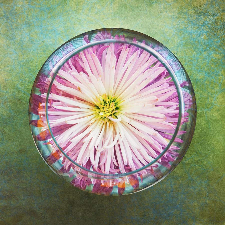 Water Flower Photograph
