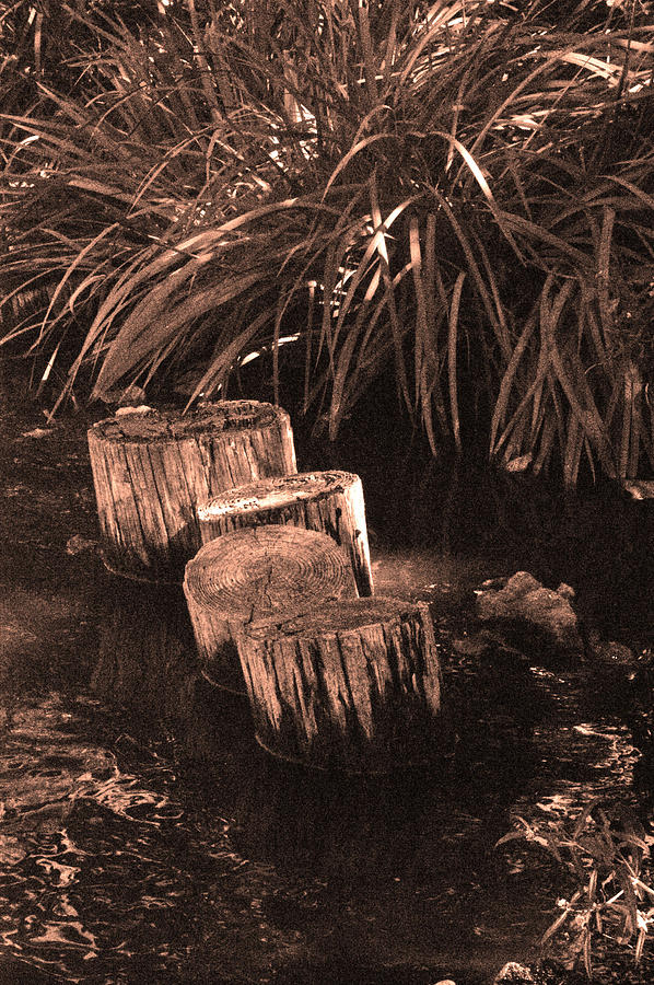 Sepia Photograph - Water Garden by Audrey Venute
