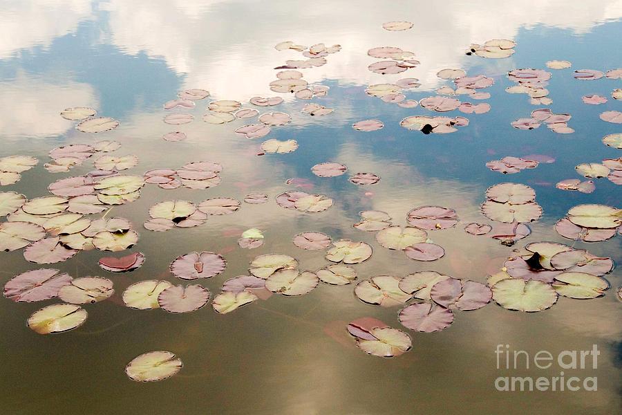 Nature Photograph - Water Lilies In Schoenbrunn Vienna Austria by Julia Hiebaum
