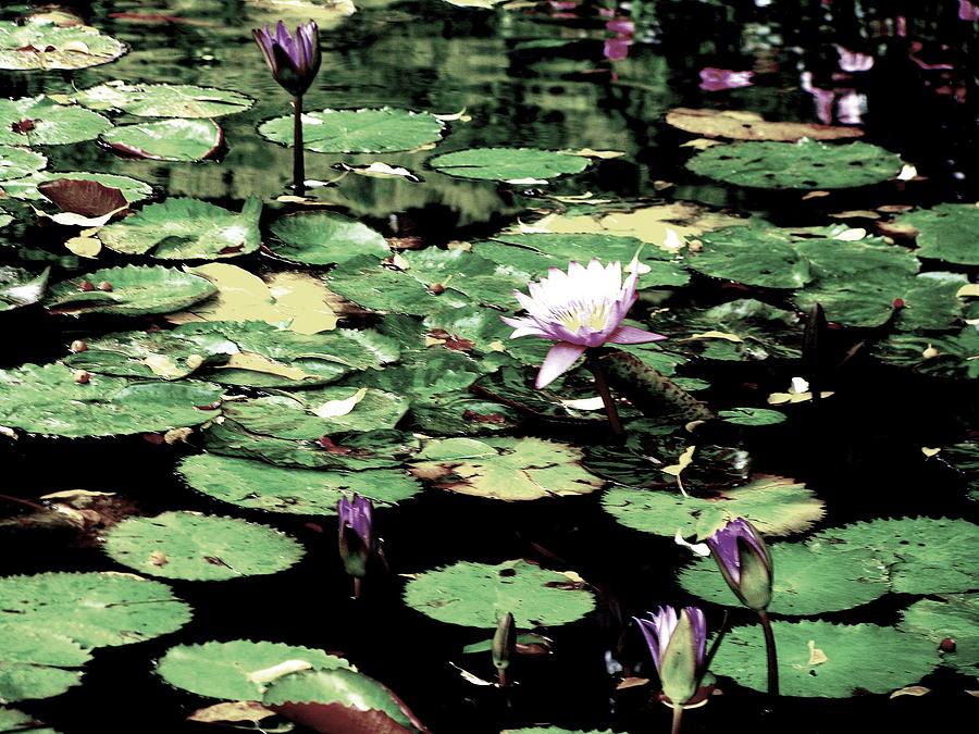 Water Photograph - Water Lilies by Oksana Pelts