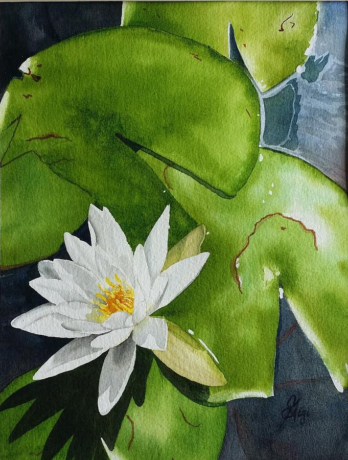 Water Lilly by Gigi Dequanne