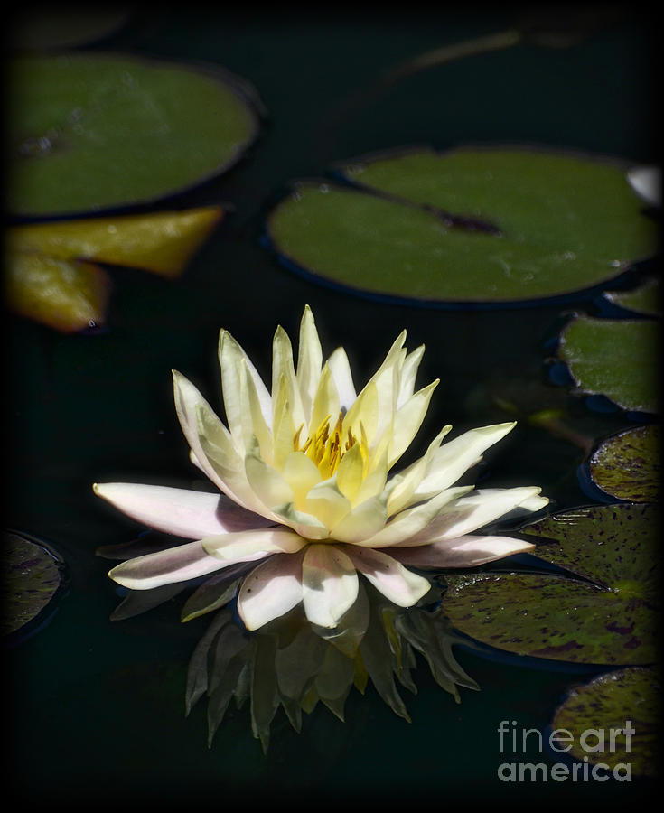 Water Lilly Photograph - Water Lilly  by Saija  Lehtonen