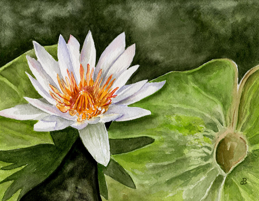 Water Lily Painting By Brenda Owen