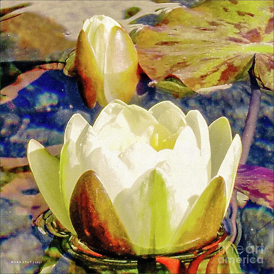 Water Lily Bud Pad Pond Digital Art