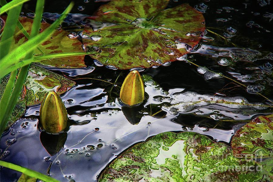 Water lily buds by Jolanta Anna Karolska