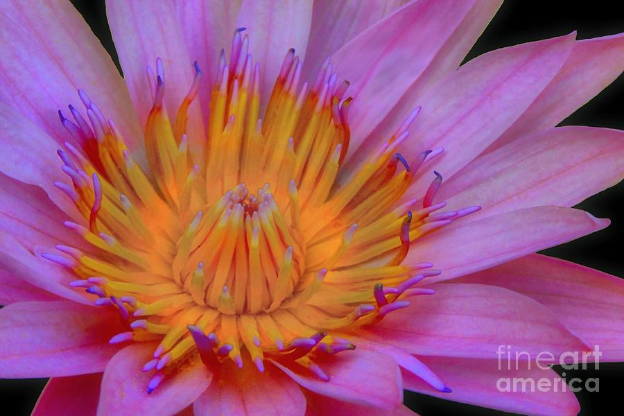 Flower Photograph - Water Lily by DJ Florek