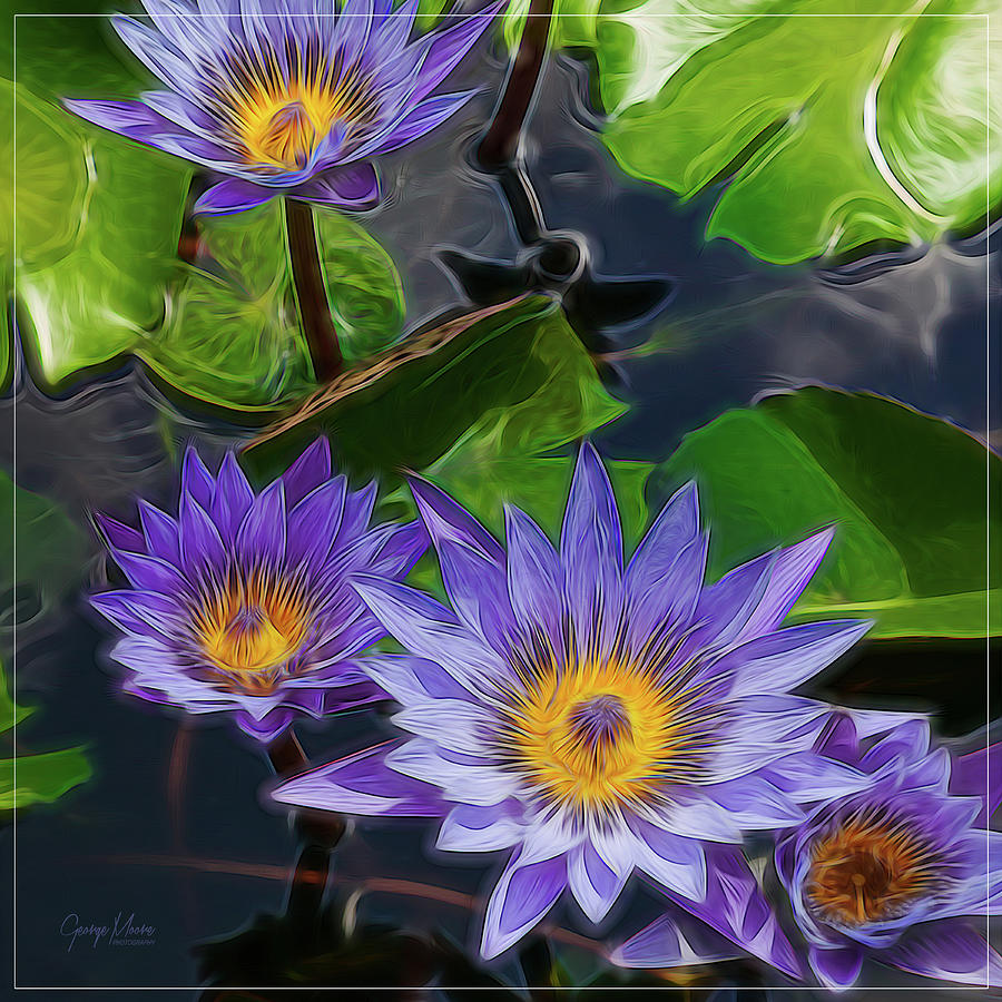 Reynolda Gardens Photograph - Water Lily by George Moore