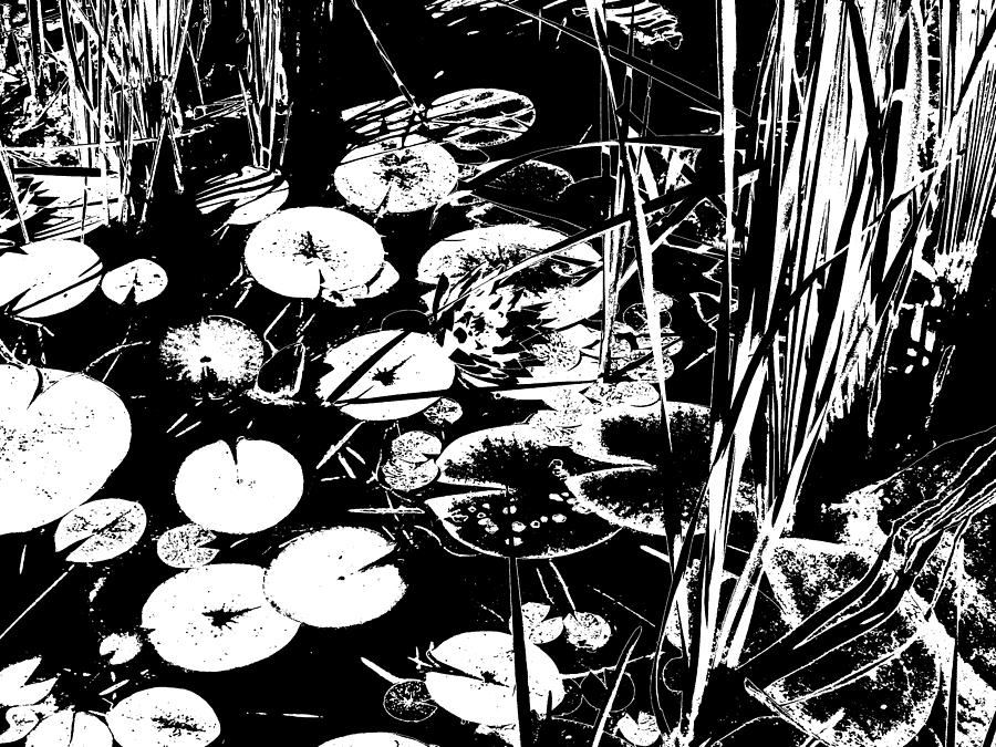 Black And White Photograph - Water Lily Pond in Black and White by Colleen Cornelius