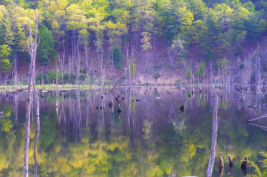 Water Photograph - Water Logged by Jewels Hamrick