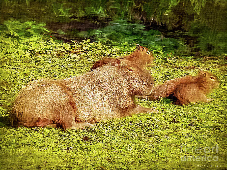 Water Pig Trio Photograph