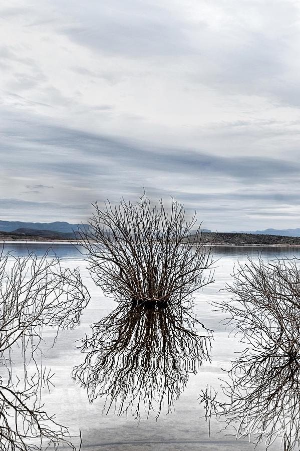 Arizona Photograph - Water Shrub In Blue by Colleen Joy