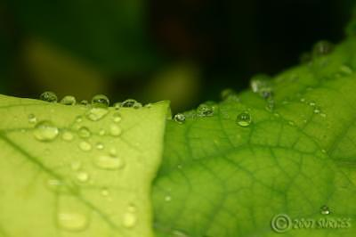 Leaves Photograph - Water Tones by Trevor Surges