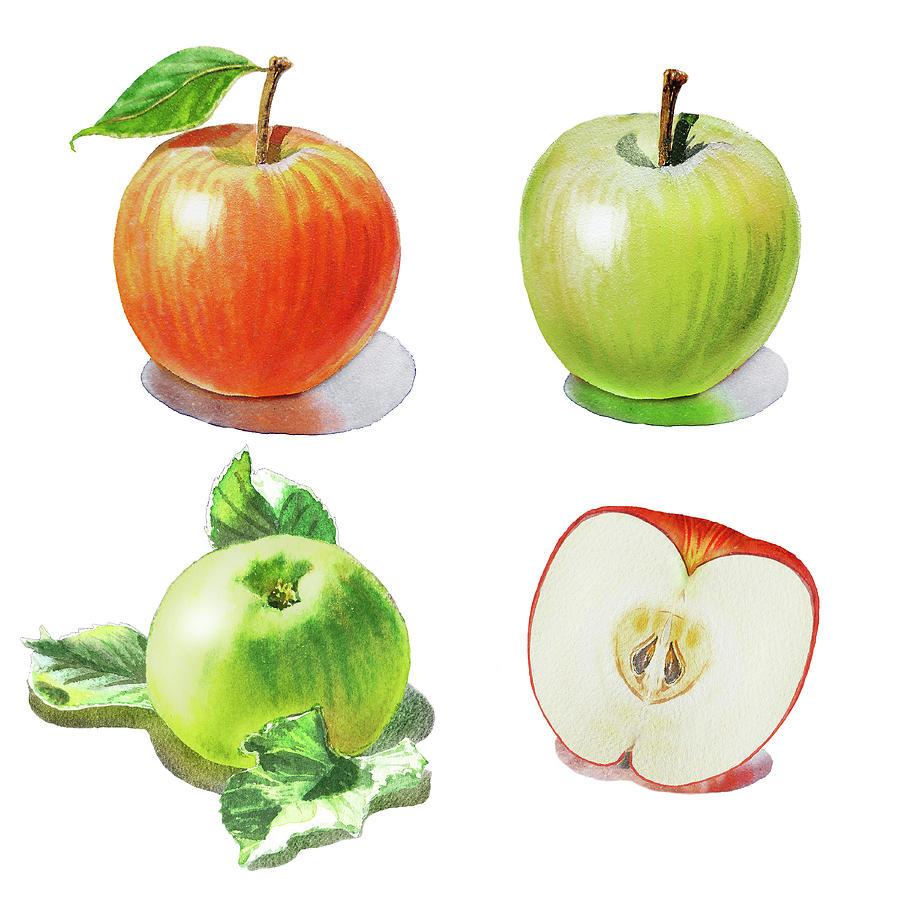 Watercolor Apples Illustration Painting by Irina Sztukowski (900 x 900 Pixel)