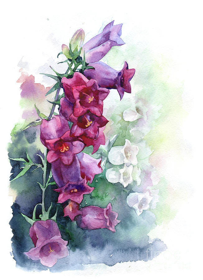 Watercolor bells flowers painting by mary pashkova watercolor painting watercolor bells flowers by mary pashkova mightylinksfo