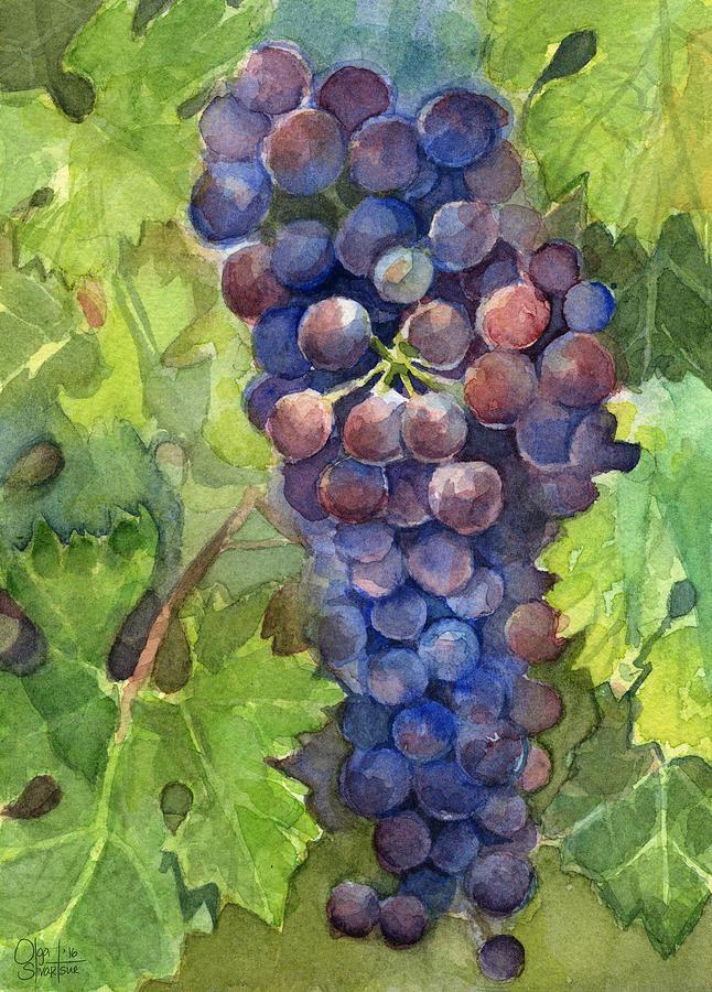 Watercolor Grapes Painting Painting By Olga Shvartsur