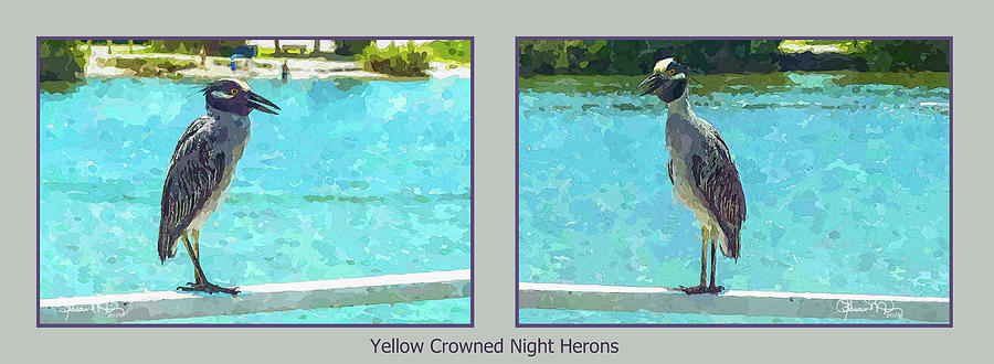 Watercolor Herons 2 of 4 by Susan Molnar