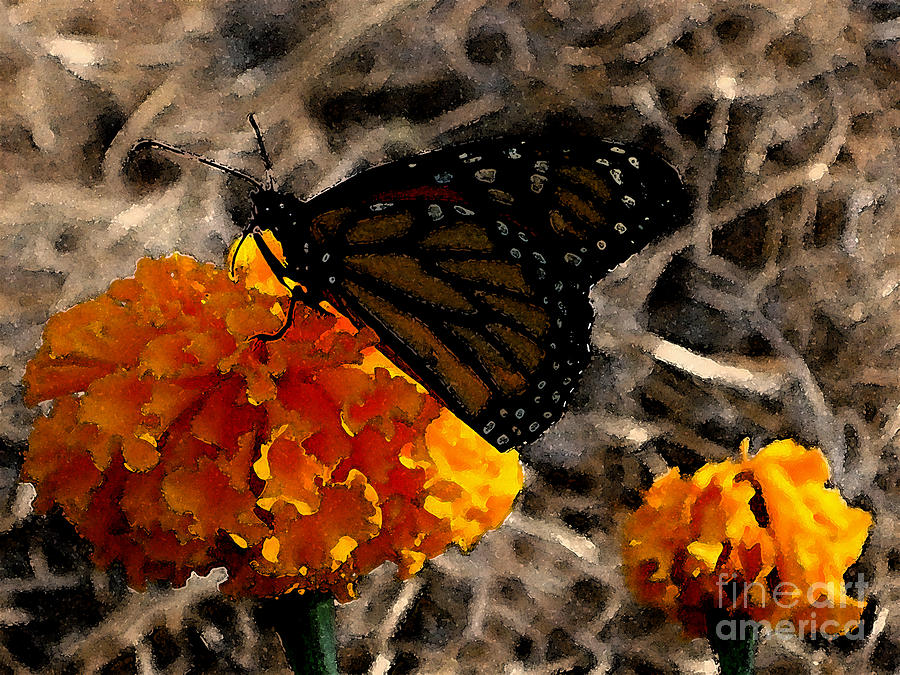 Monarch Photograph - Watercolor Monarch by PJ  Cloud
