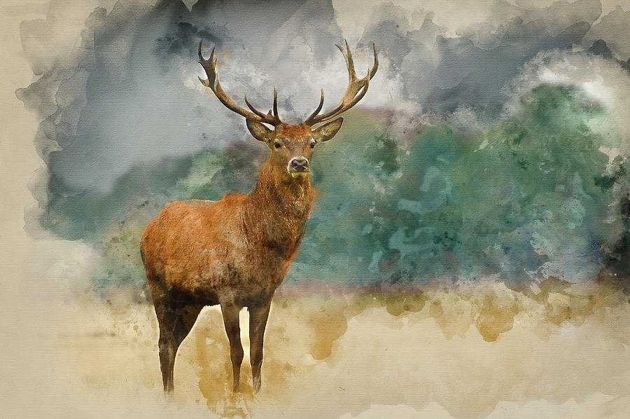 Red Deer Photograph   Watercolor Painting Of Portrait Of Majestic Red Deer  Stag In Aut By