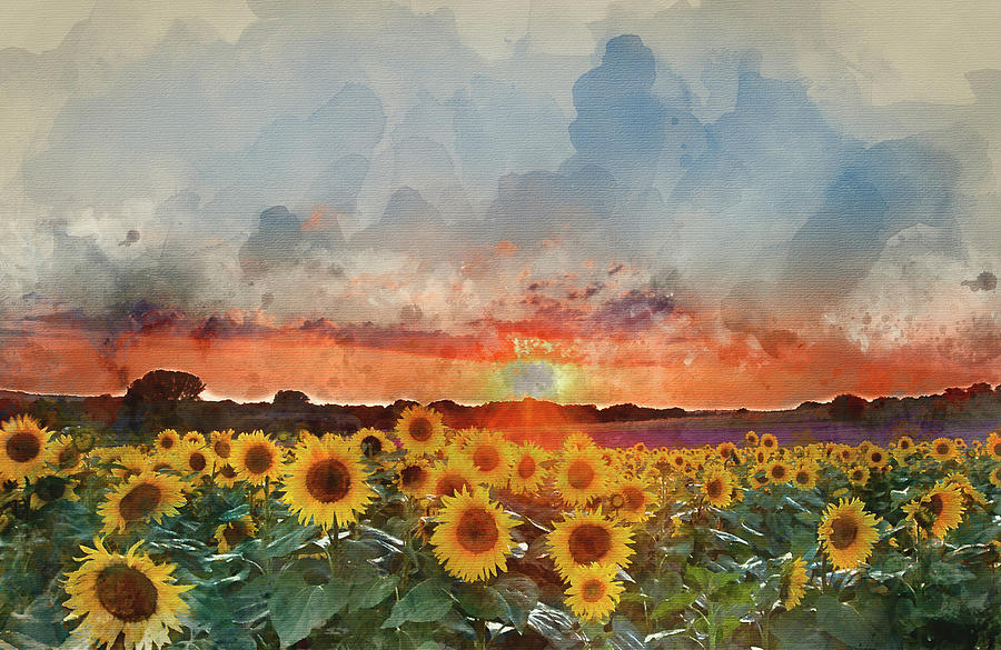 Watercolor Painting Of Sunflower Summer Sunset Landscape With Bl