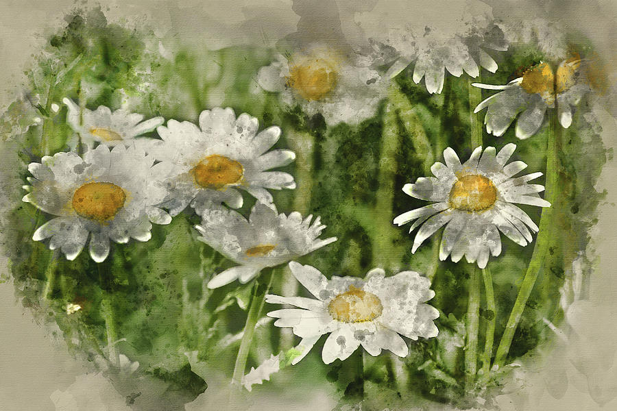Watercolor Painting Of Wild Daisy Flowers In Wildflower Meadow L Photograph By Matthew Gibson