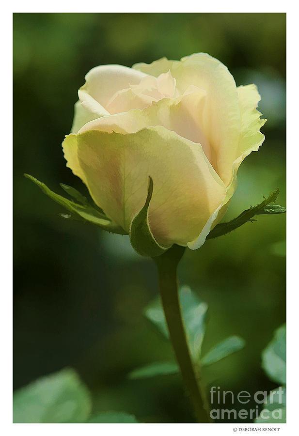 Rose Photograph - Watercolor Rose by Deborah Benoit