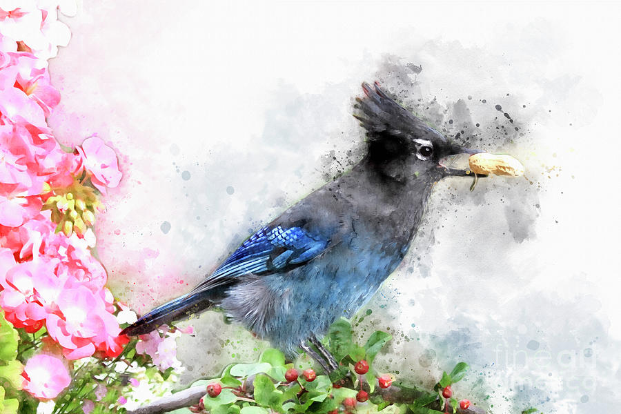 Watercolored Steller's Jay  by Teresa Zieba
