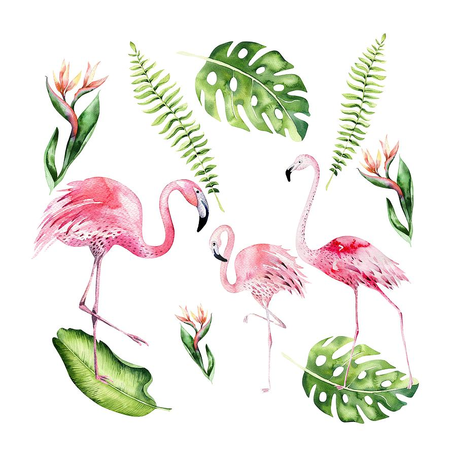 Watercolour Flamingo Family by Georgeta Blanaru