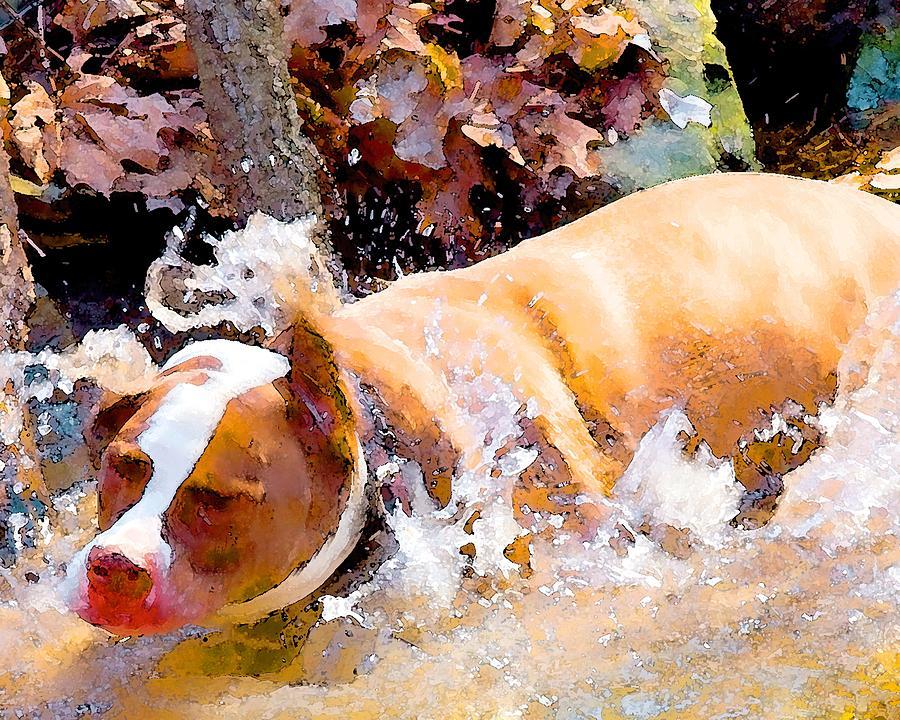 Dpg Digital Art - Waterdog by John Toxey