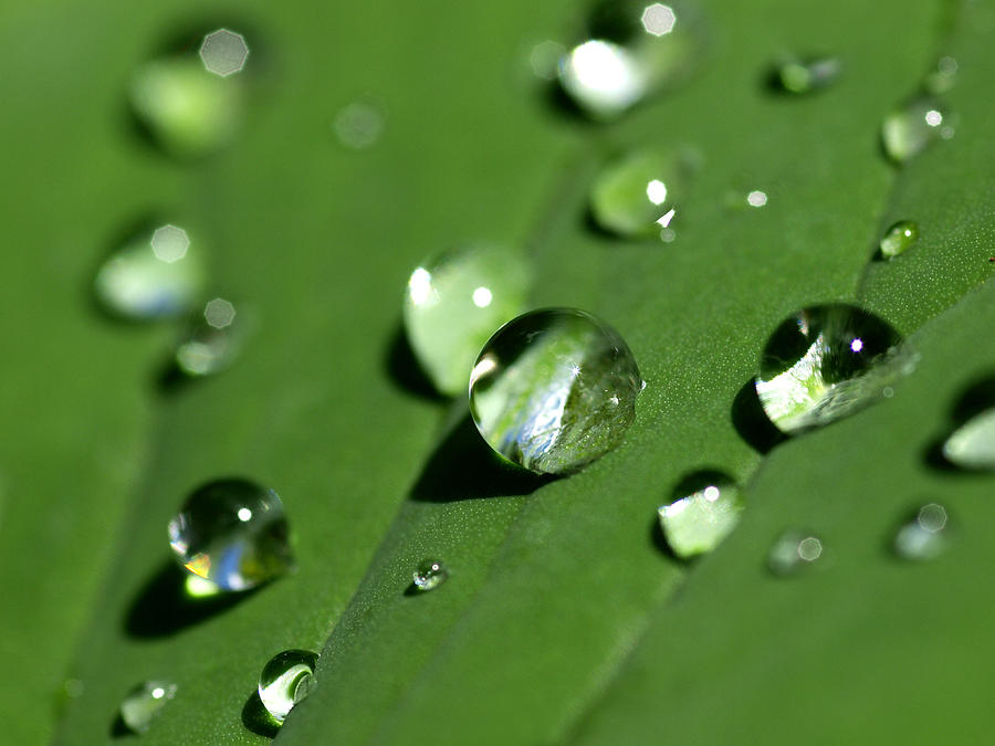 Dew Photograph - Waterdrops by Melanie Viola
