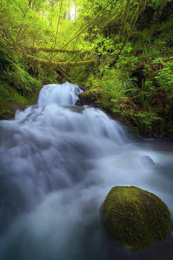 Waterfall Photograph - Waterfall At Shepperds Dell Falls by David Gn