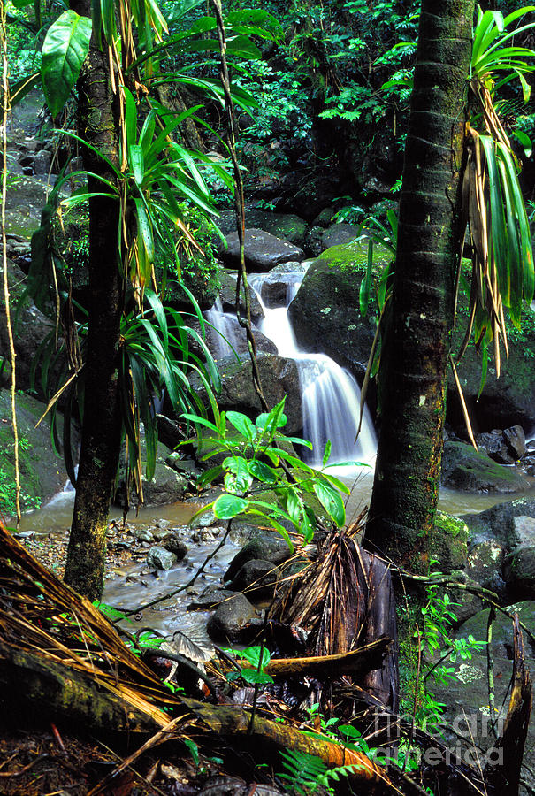 Puerto Rico Photograph - Waterfall El Yunque National Forest Mirror Image by Thomas R Fletcher