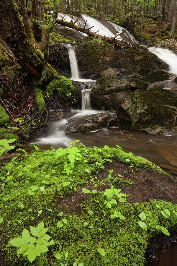 Waterfall Photograph - Waterfall Oasis  by Irwin Barrett