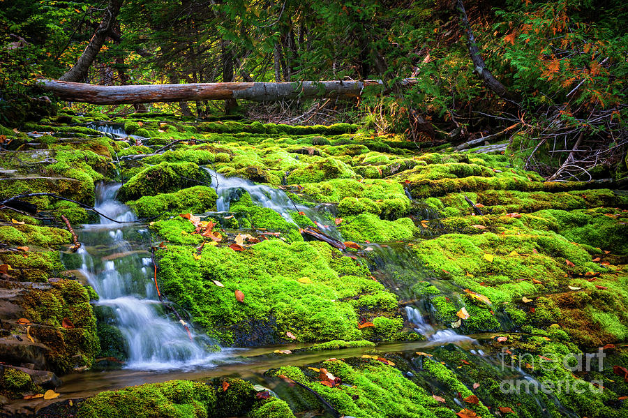 Waterfall over mossy rocks by Elena Elisseeva